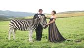 zebrafront